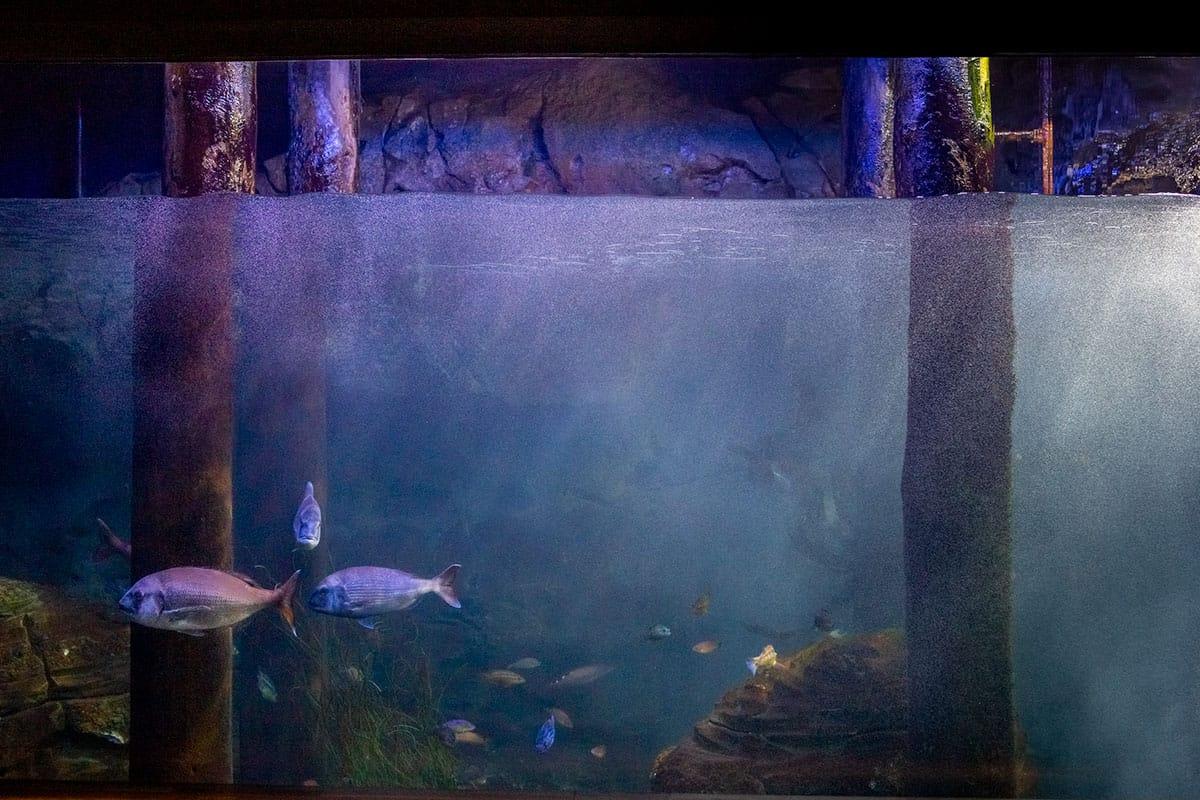 Unterwasserszenerie im Aquarium im Ozeaneum Stralsund