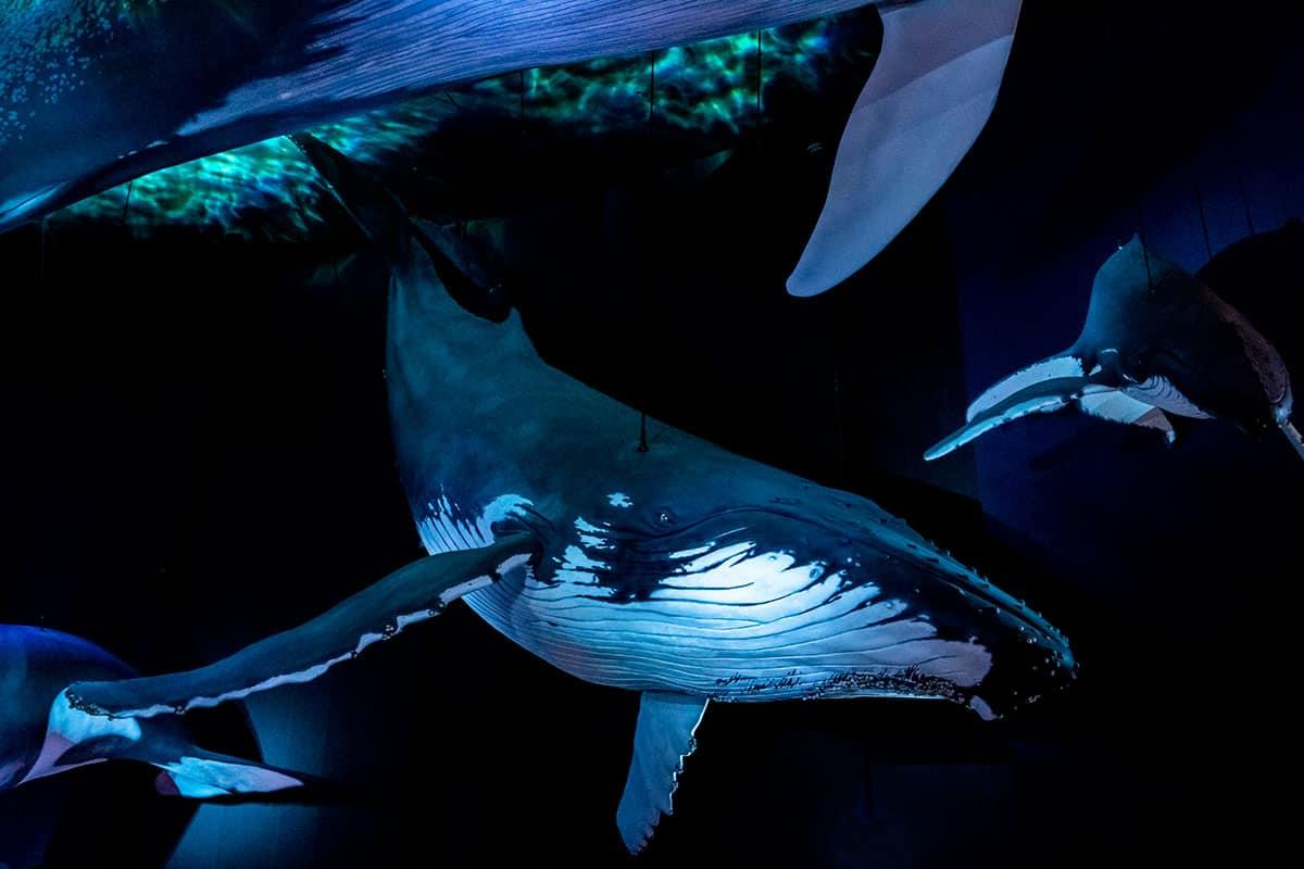 Wal in der Ausstellung