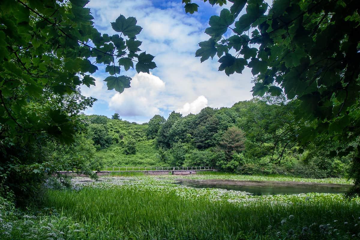 Lily Ponds an der Südküste von Pembrokeshire